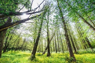 Bosco di Floresta