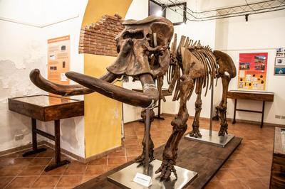 Museo dei fossili Maugeri Gemellaro
